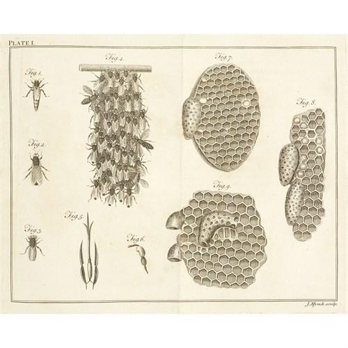 Lot 93 - [Natural History] Wildman, Thomas