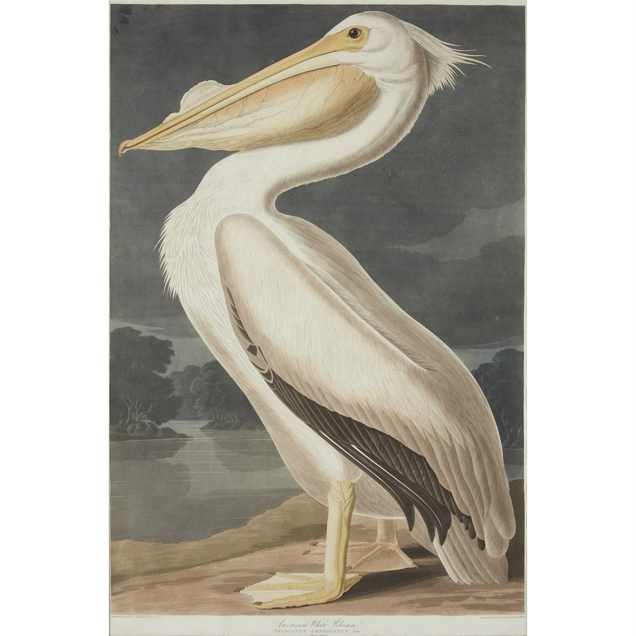 Lot 438 - [Prints] Audubon, John James