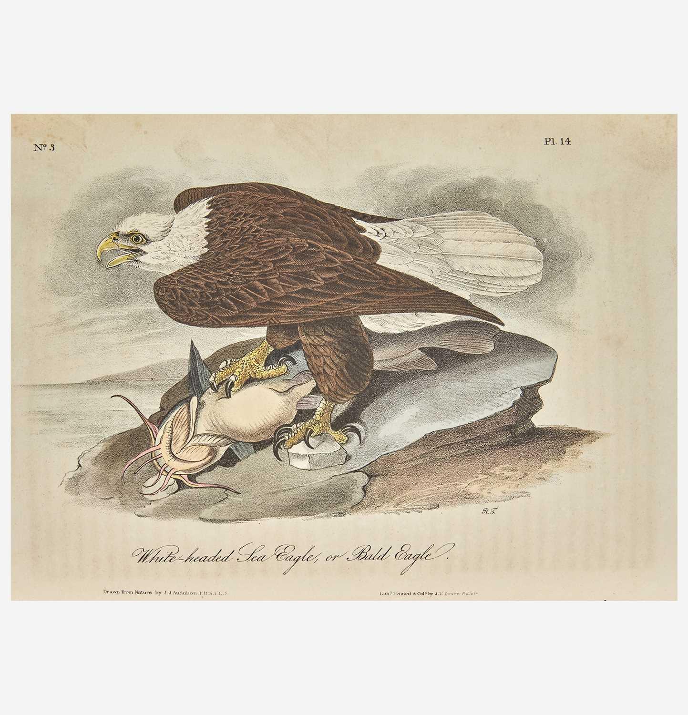 Lot 115 - [Prints] Audubon, John James
